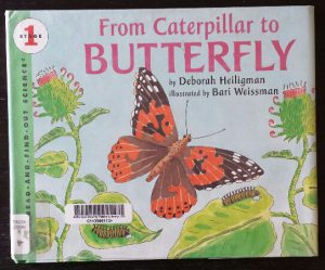from caterpillar to butterfly